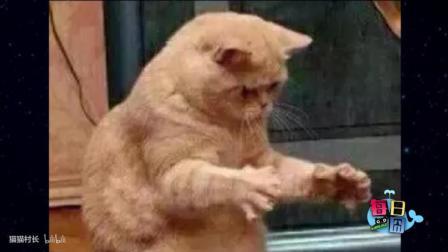 【每日一囧】这猫你不要太可爱!