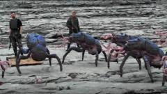外星生物找人类买武器,想要对付河道蟹,鹬蚌
