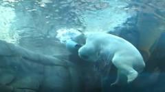 北极熊突然在水里放屁,威力实在太大,接下来