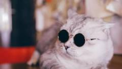 女子在店里洗头遇到猫咪推销员,喵:美女,办