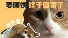 papi酱的大小咪:橘猫一个月没见主人差点认不出
