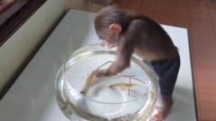 主人买2只虾逗小猴子,接下来画面憋住别笑,镜