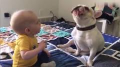 狗子为了逗宝宝,学小主人叫声,真是成精了
