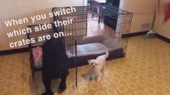 萌宠:主人故意将两只狗狗笼子的位置对调,大