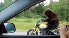 在高速路上拍到搞笑一幕,一头棕熊居然在骑车