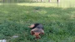 萌宠:狗子上班时间睡觉,我说它下班,你看它