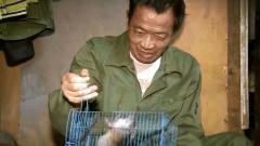 最后的棒棒:捕鼠笼子很给力,总有老鼠自投罗